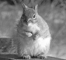 Squirrel in Black & White by Martha Medford