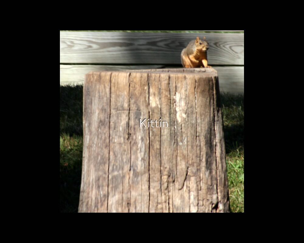 squirrel 01 by Kittin