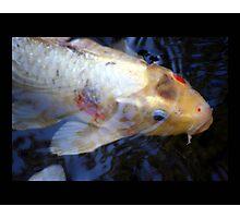 fish 02 Photographic Print