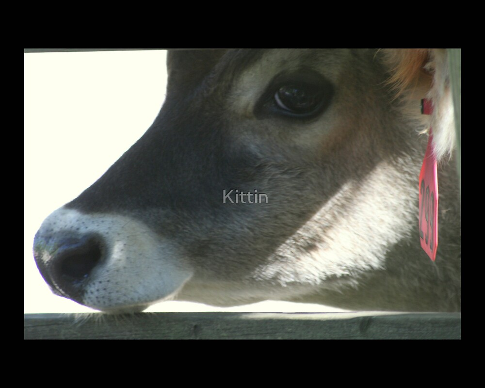 cow 01 by Kittin