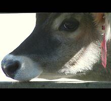 cow 01 by Kittin