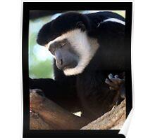 monkey 01 Poster