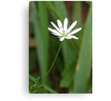 Single White Flower Canvas Print
