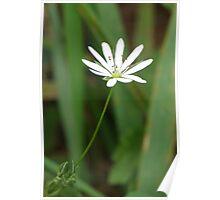 Single White Flower Poster