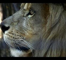lion 02 by Kittin
