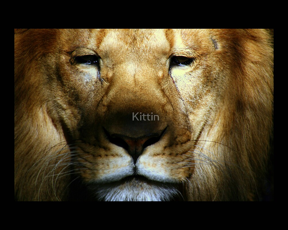 lion 03 by Kittin