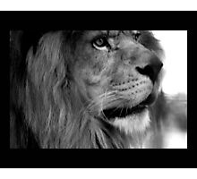 lion 04 Photographic Print