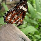 butterfly...obviously!! by SusanC