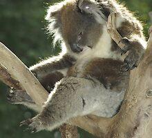 Boy I'm stuffed. by Aussiebluey