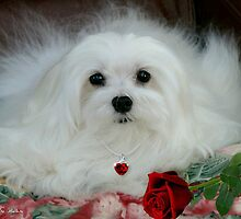 Snowdrop the Maltese on Mother's Day by Morag Bates