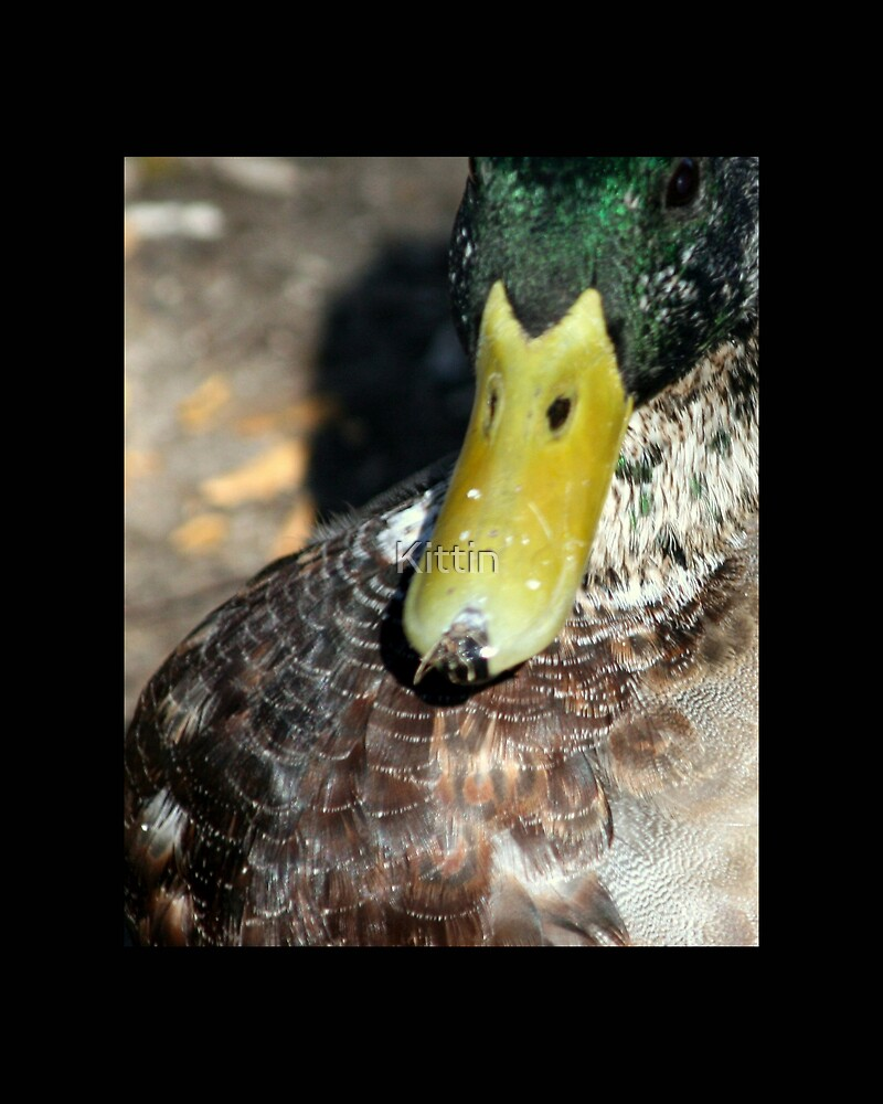 bird 07 by Kittin
