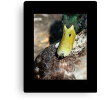 bird 07 Canvas Print