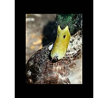 bird 07 Photographic Print