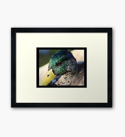 bird 08 Framed Print