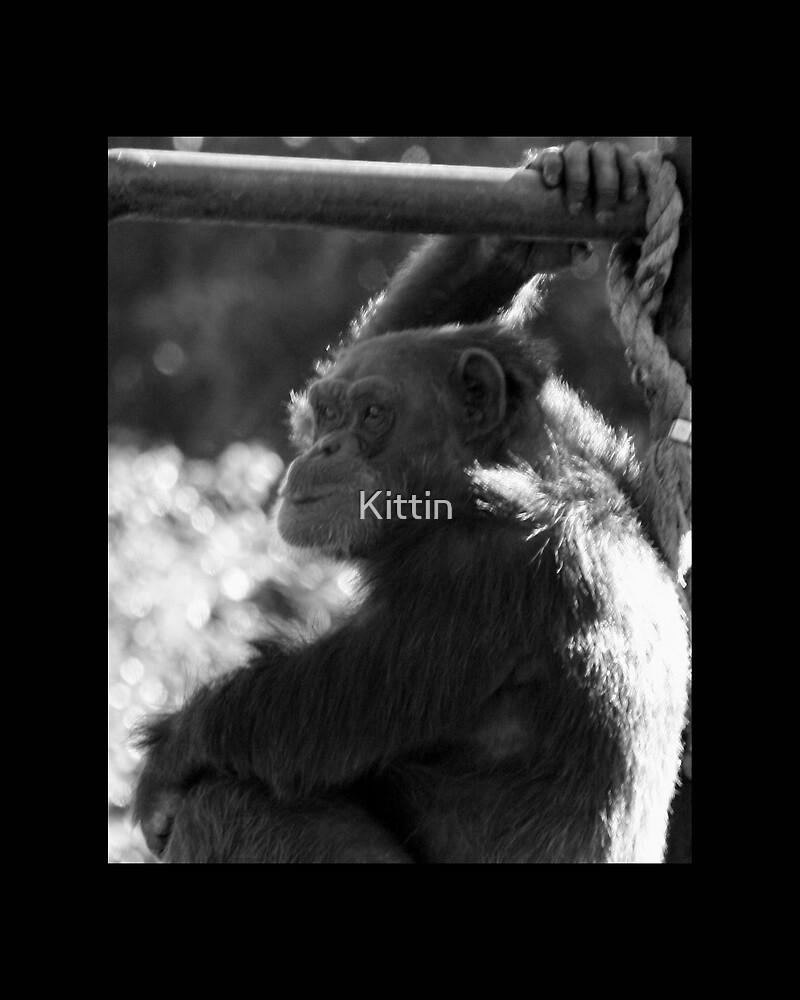 monkey 04 by Kittin