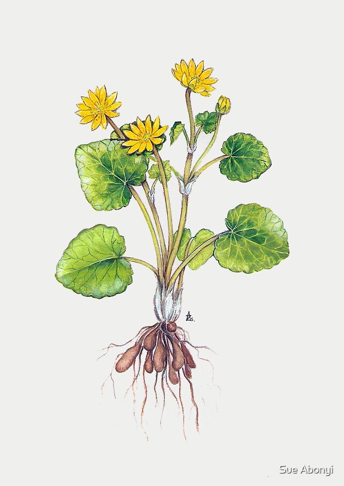 Lesser Celandine - Ficaria verna by Sue Abonyi