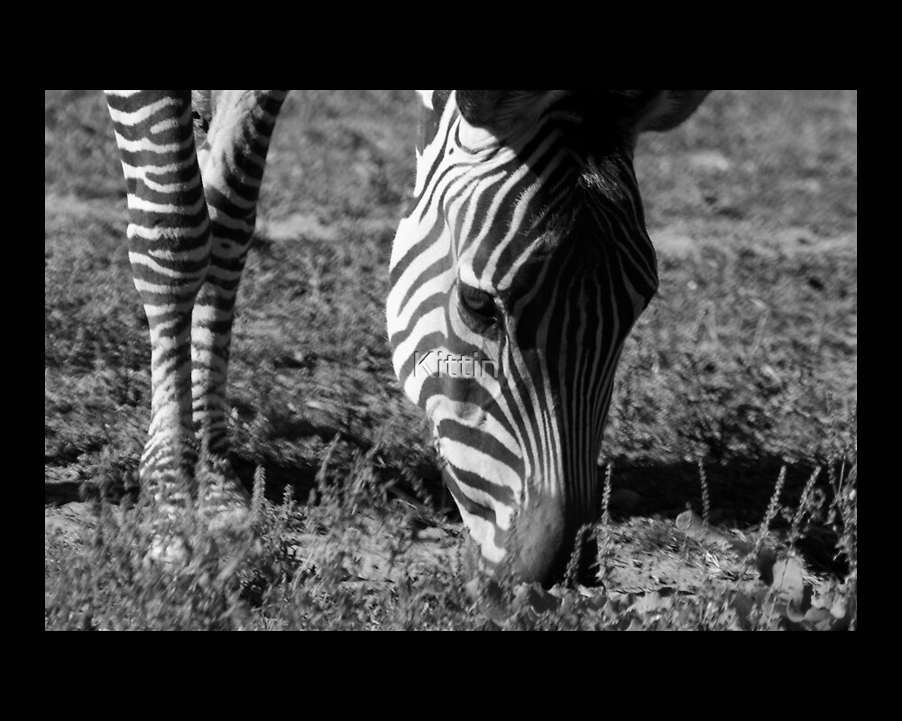 zebra 03 by Kittin