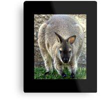 kangaroo 01 Metal Print