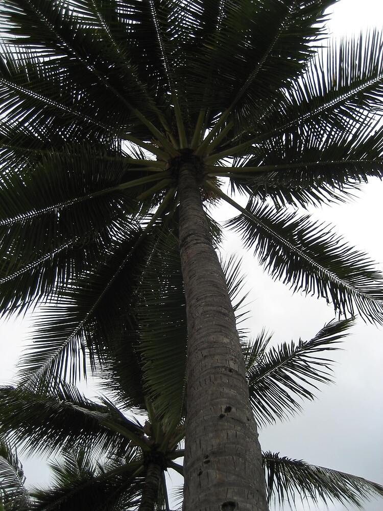 palms by SusanC