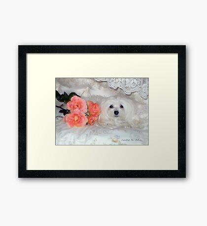 Snowdrop the Maltese & Roses Framed Print