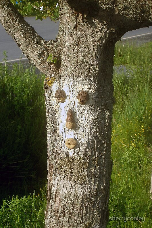 Tree Face by sherryconley