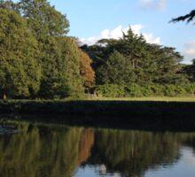 Pond Reflection Sticker