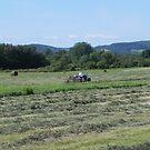 Cutting The Hay by Martha Medford
