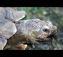 turtle 01 by Kittin