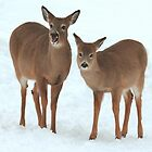 Two Beautiful Deer. by vette