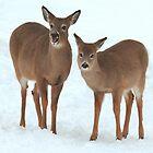 Two Beautiful Deer. by vette