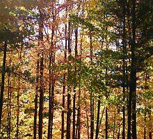 Autumn Drive in Michigan by William  Boyer