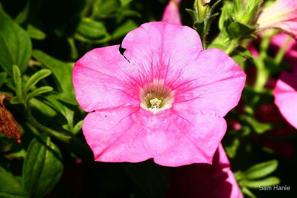 Flower by Sam Hanie