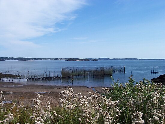 Down By The Bay by Martha Medford