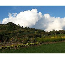 The Winery Gardens Photographic Print