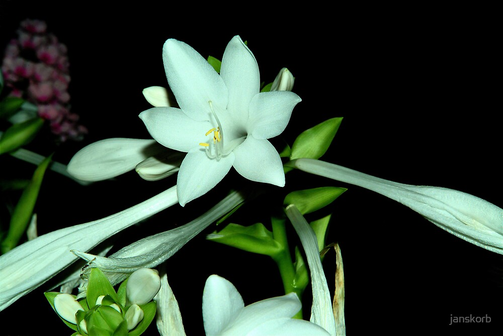 white flowers by janskorb