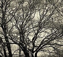 The Bare Winter Tree by Bill Lighterness