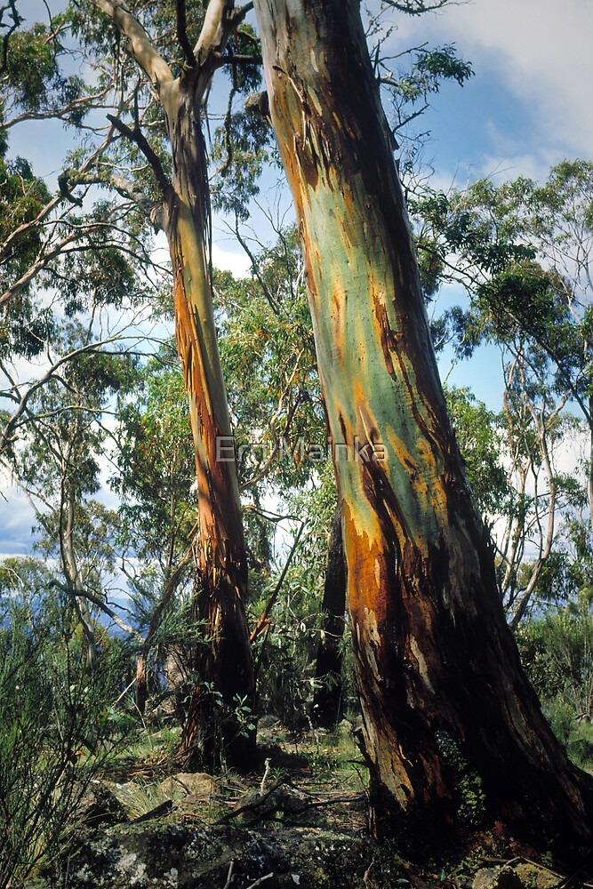 Mountain Gums by Ern Mainka