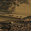 Desert Camel Trek by desertman