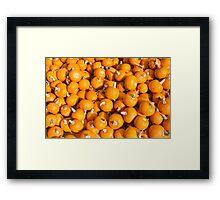 Little pumpkins Framed Print
