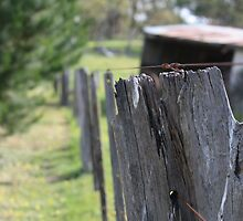 fence by Patrick Keevil