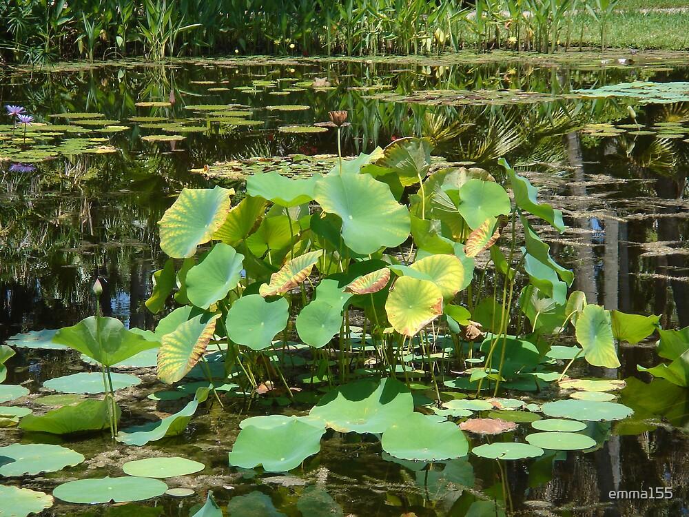 Beautiful Pond by emma155