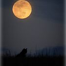 The Cat and the Full Moon by TrendleEllwood