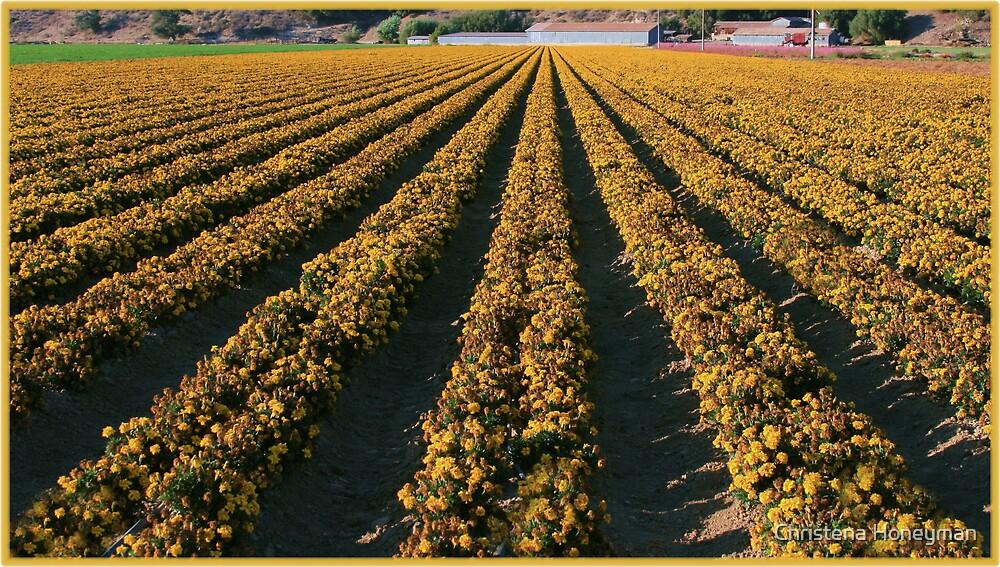 Yellow Flowers by Christena Honeyman