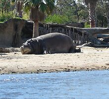 Hippo sunbathing by RaeRae