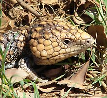 Blue tongue bob tail goanna by Coralie Plozza