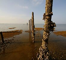 Beach Posts by Rebecca Smith