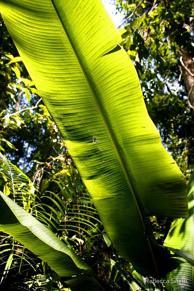 Amazon Leaf by Rebecca Smith