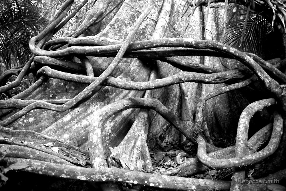 Black and White Amazon Tree by Rebecca Smith