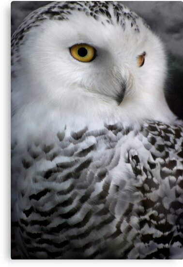 Hedwig by Becca  Cusworth
