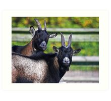 Two Goats Art Print